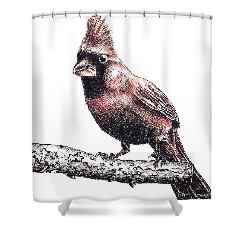 Ink Sketch Shower Curtain featuring the drawing Cardinal Male by Katharina Filus
