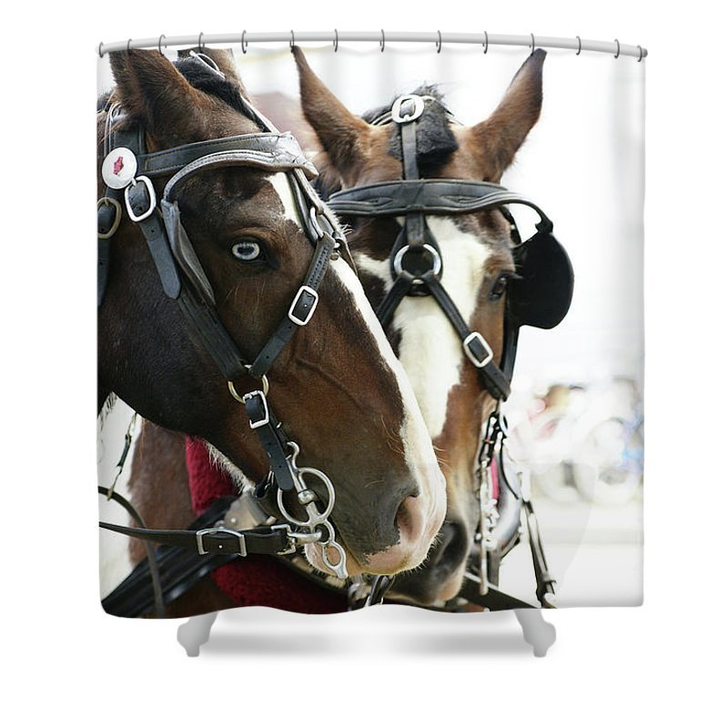 Carriage Shower Curtain featuring the photograph Carriage Horse - 3 by Linda Shafer