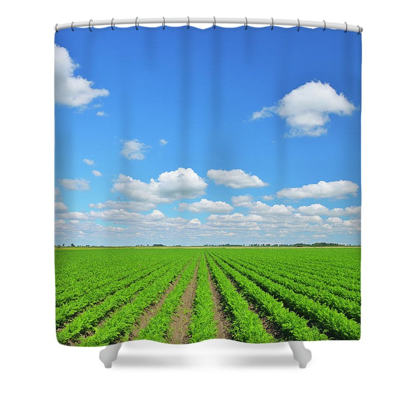 Tranquility Shower Curtain featuring the photograph Carrot Field by Raimund Linke