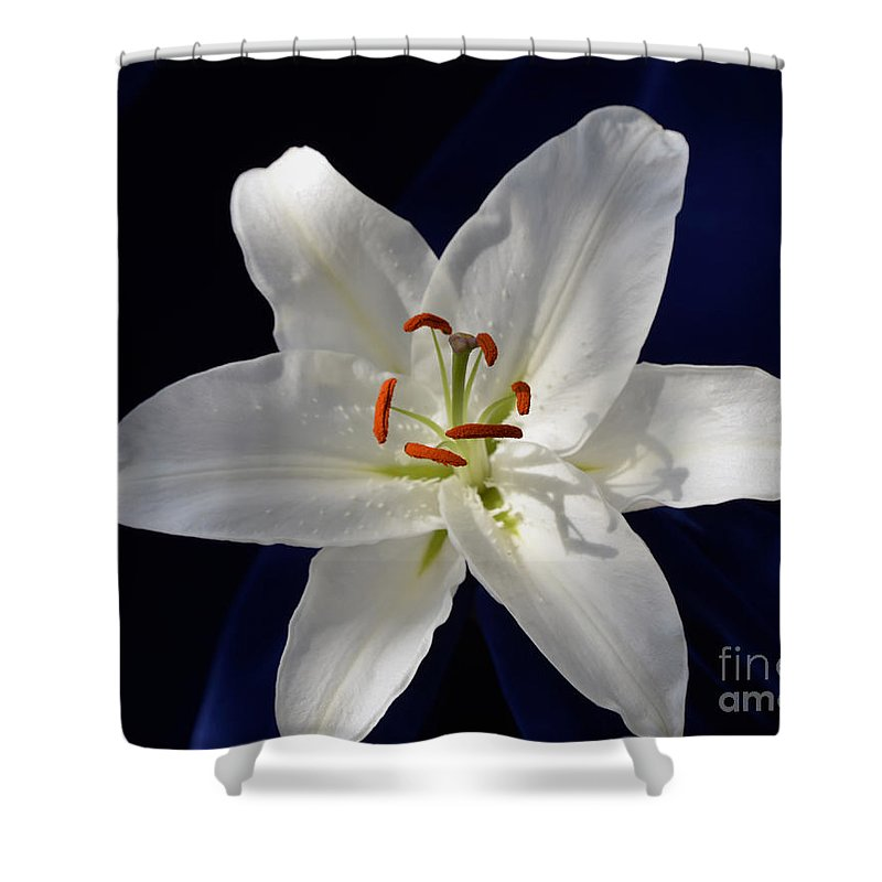 Lily Shower Curtain featuring the photograph Casablanca White 0935 by Terri Winkler