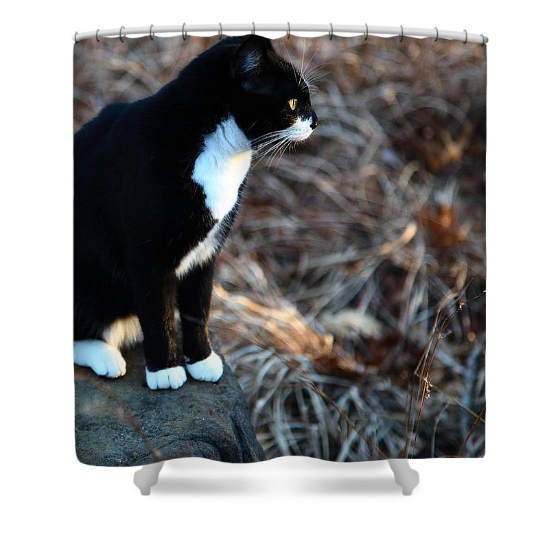 Cat Shower Curtain featuring the photograph Cat At Sunrise by Michael Dougherty