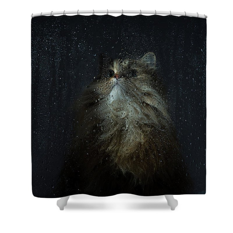 Pets Shower Curtain featuring the photograph Cat By Rainy Window by Benjamin Torode