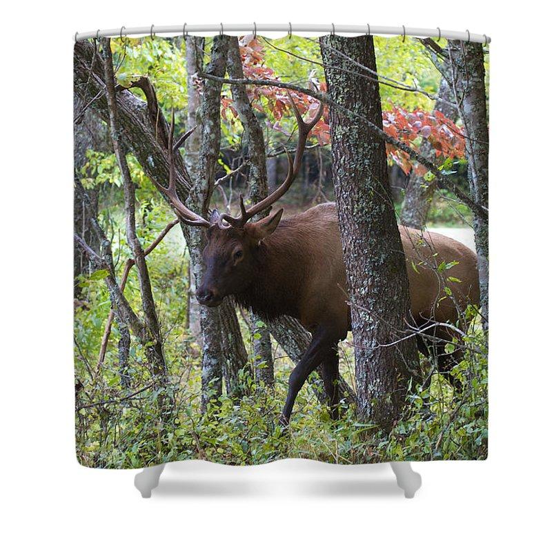 North Carolina Shower Curtain featuring the photograph Cataloochee Bull Elk by David Beebe