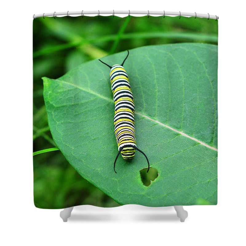 Caterpillar Shower Curtain featuring the photograph Caterpillar Heart by Brittany Horton
