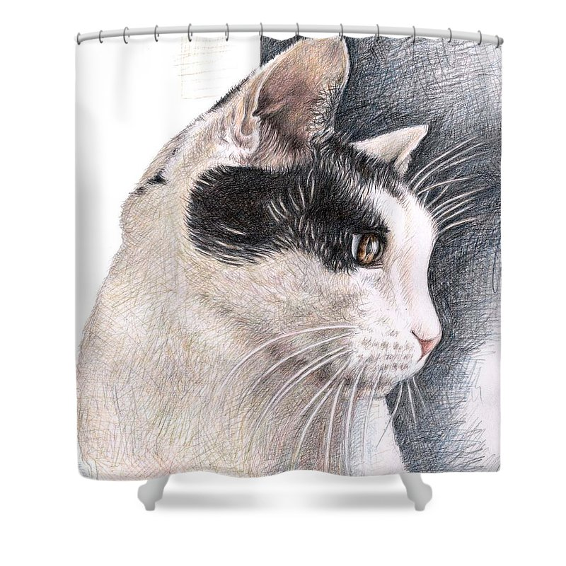 Cat Shower Curtain featuring the drawing Cats View by Nicole Zeug