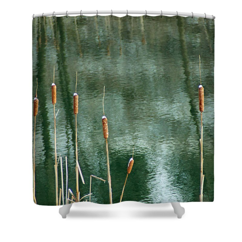 Cattail Shower Curtain featuring the photograph Cattails On Green by Photographic Arts And Design Studio