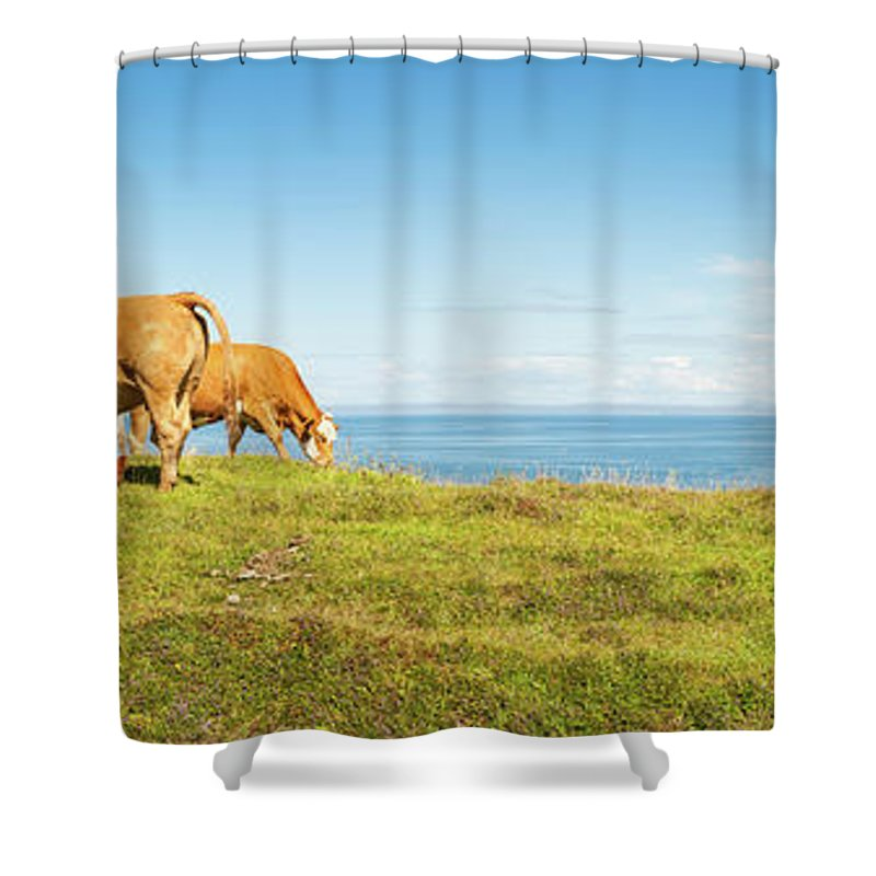 Water's Edge Shower Curtain featuring the photograph Cattle Grazing In Picturesque Meadow by Fotovoyager