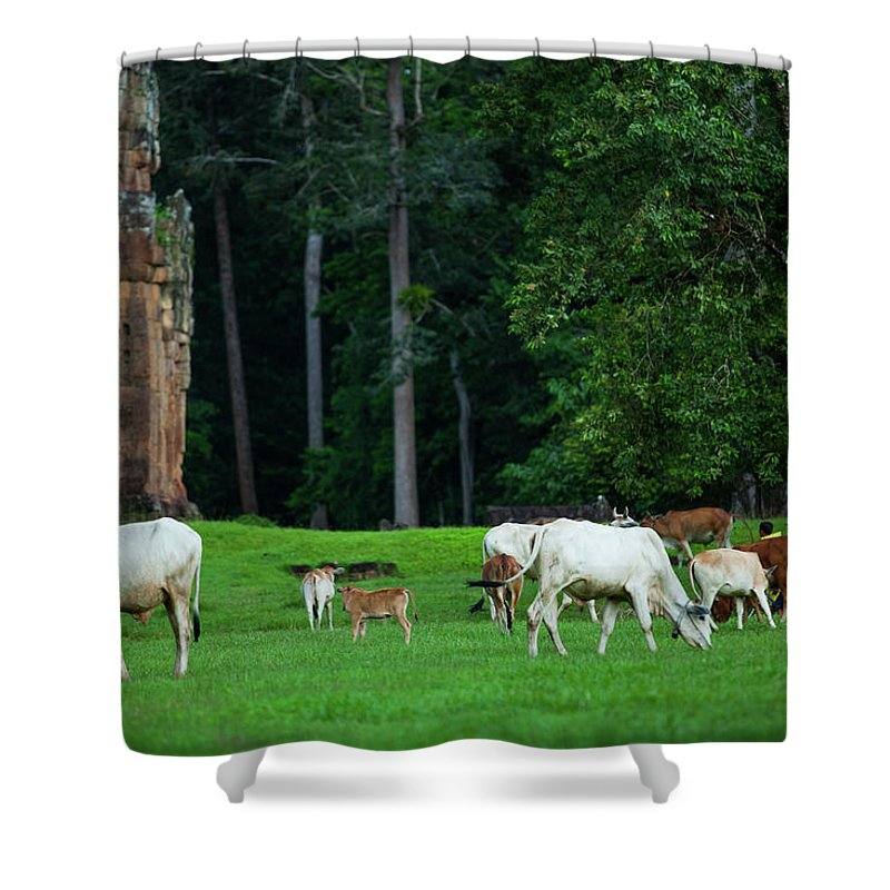 Scenics Shower Curtain featuring the photograph Cattle On The Grass by Greenlin