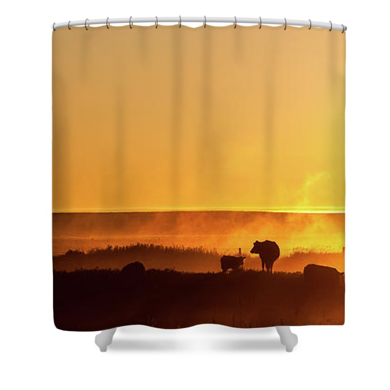 Scenics Shower Curtain featuring the photograph Cattle Silhouette Panorama by Imaginegolf