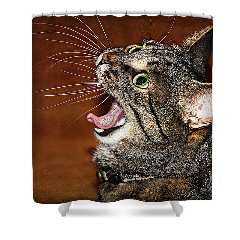 Cat Shower Curtain featuring the photograph Caught In The Act by Jolanta Anna Karolska