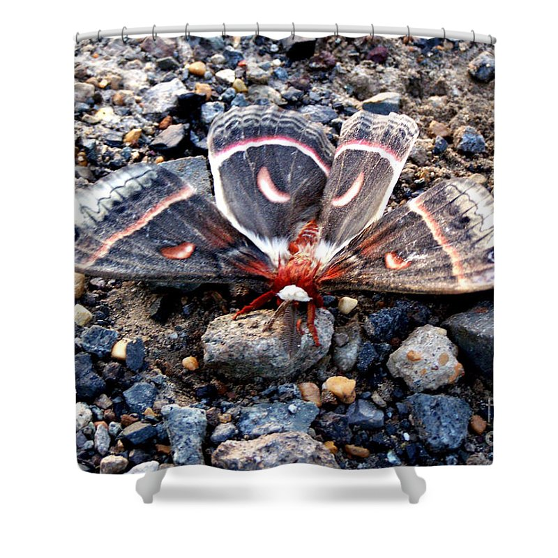 Cecropia Moth Shower Curtain featuring the photograph Cecropia Moth Blending In by Kathy White