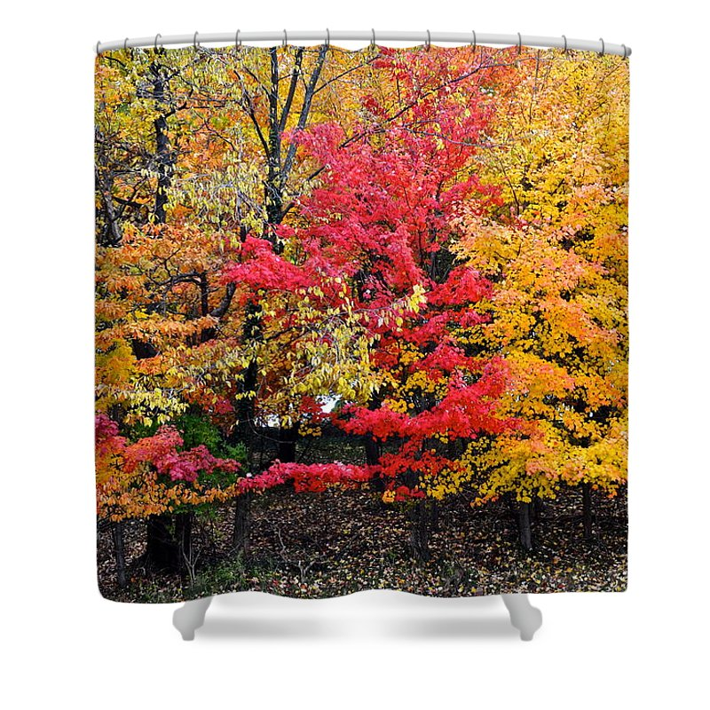 Landscape Shower Curtain featuring the photograph Center Of Attention by Frozen in Time Fine Art Photography