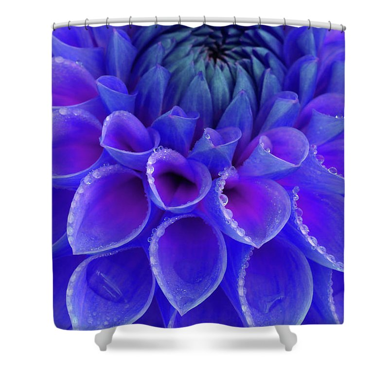 Haslemere Shower Curtain featuring the photograph Centre Of Blue And Purple Dahlia Flower by Rosemary Calvert