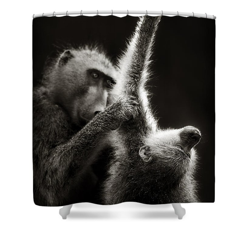 Grooming Shower Curtains