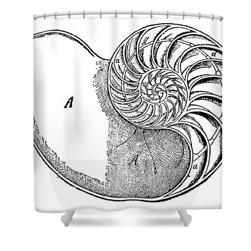 Aquatic Shower Curtain featuring the photograph Chambered Nautilus by Granger
