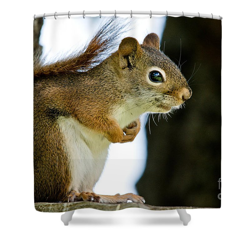 Squirrel Shower Curtain featuring the photograph Chatty Squirrel by Cheryl Baxter