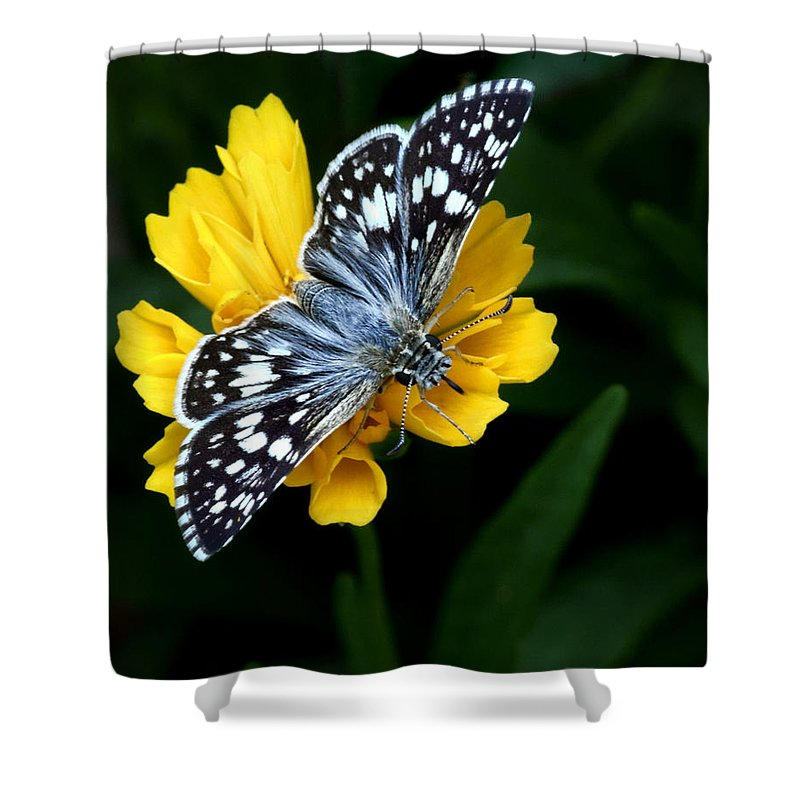 Checkered Skipper Shower Curtain featuring the photograph Checkered Skipper Vertical by Nikolyn McDonald
