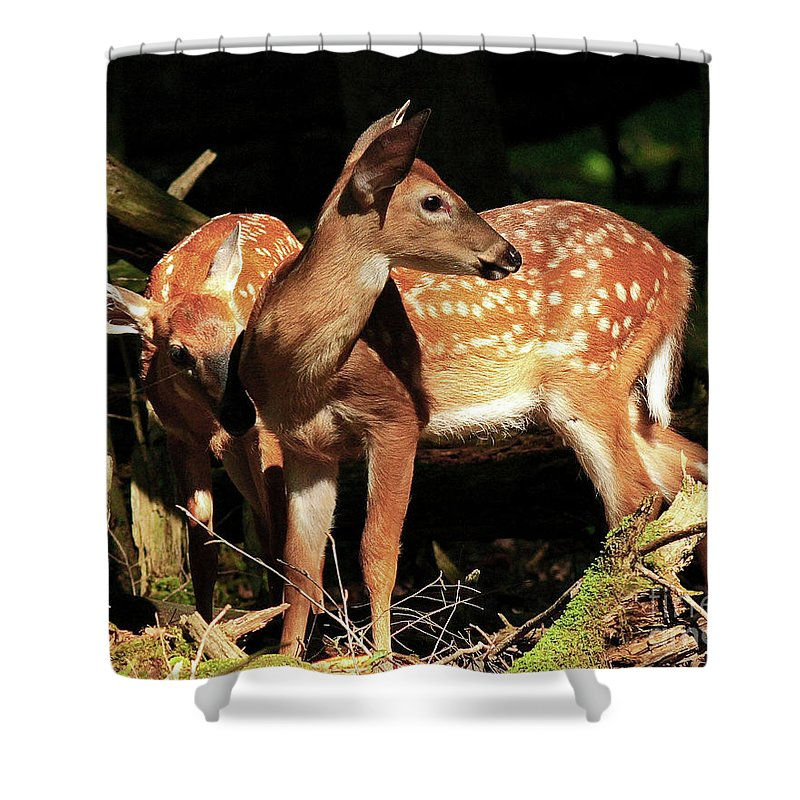 Fawn Shower Curtain featuring the photograph Checking The Back Trail by Douglas Stucky