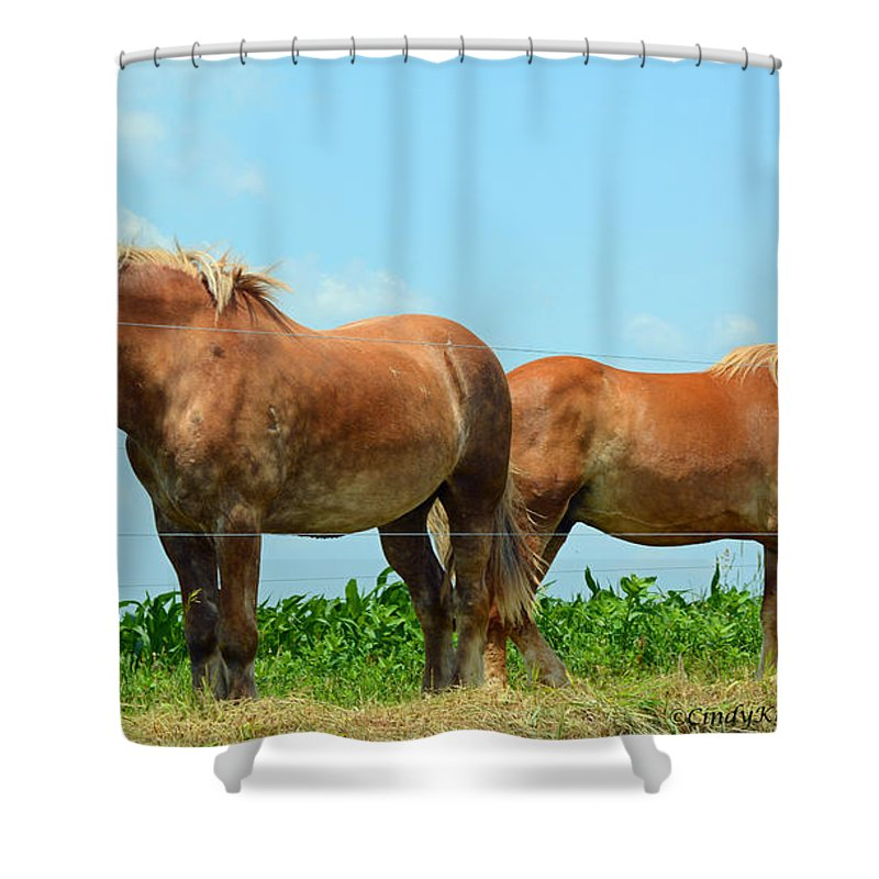 Horses Shower Curtain featuring the photograph Cheek To Cheek by Cindy Manero