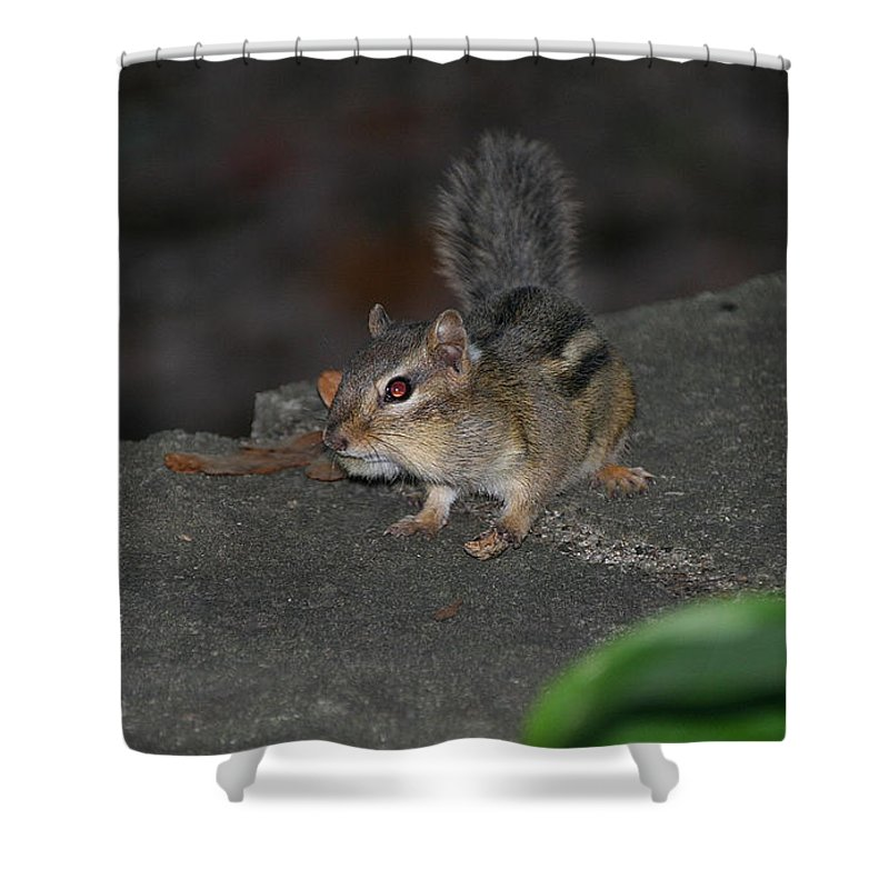 Animal Shower Curtain featuring the photograph Cheeky by Susan Herber
