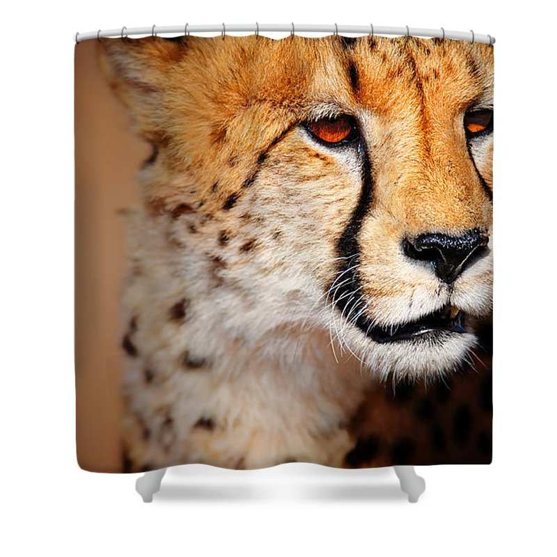 Cheetah Shower Curtain featuring the photograph Cheetah Portrait by Johan Swanepoel