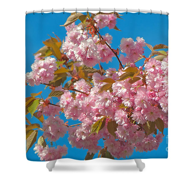 Cherry Blossoms Shower Curtain featuring the photograph Cherry Blossoms 2 by Sharon Talson