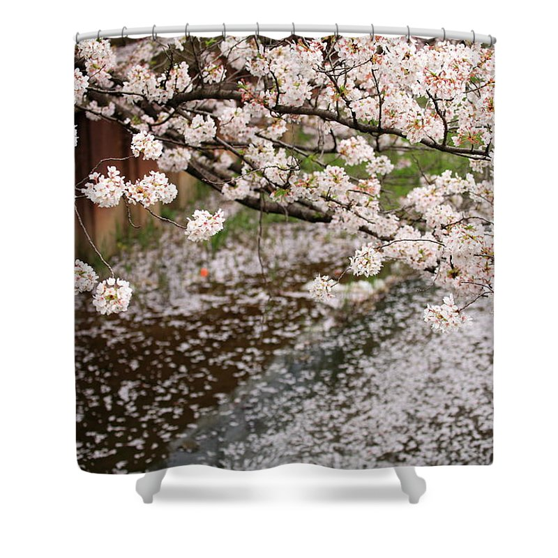 Season Shower Curtain featuring the photograph Cherry Blossoms by Photography By Zhangxun