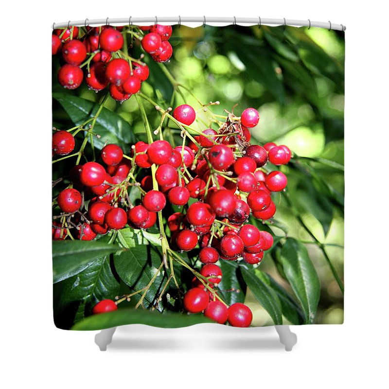 Berries Shower Curtain featuring the photograph Cherry Laurel by Christiane Schulze Art And Photography