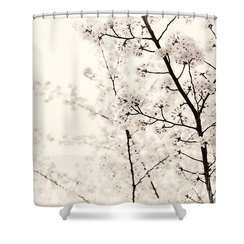 Blossom Shower Curtain featuring the photograph Cherry Tree Blossom Artistic Closeup Sepia Toned by Oleksiy Maksymenko