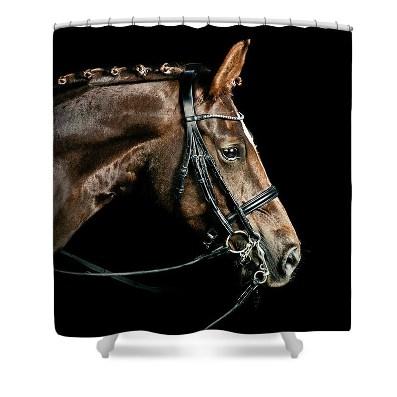 Horse Shower Curtain featuring the photograph Chestnut Dressage Horse Groomed For A by Anja Hild