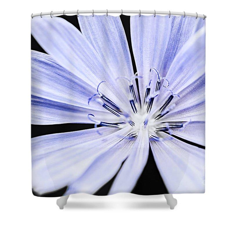 Cichorium Shower Curtains