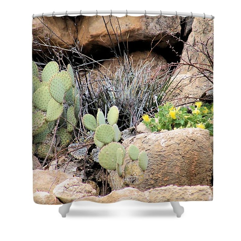 Shower Curtain featuring the photograph Chihuahuan Desert Cacti by G Berry