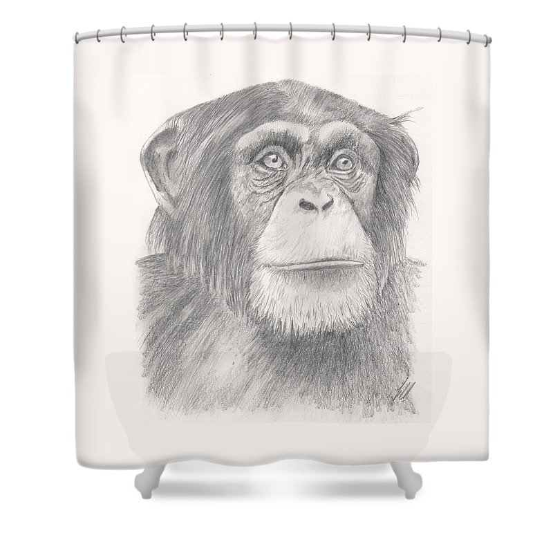 Chimpanzee Shower Curtain featuring the drawing Chimpanzee by Keith Miller