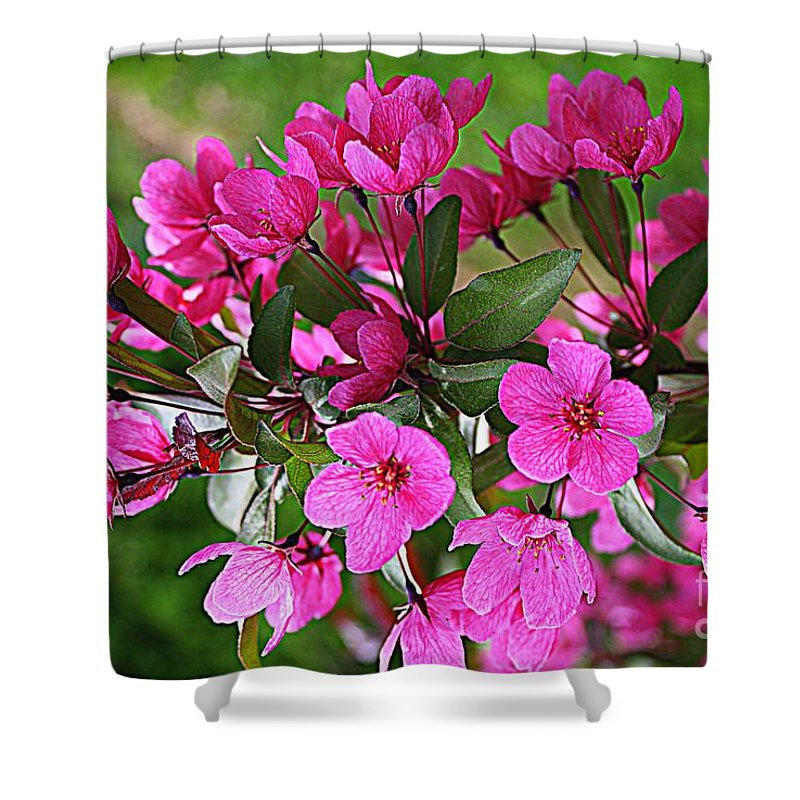 Chinese Apple Blossoms Shower Curtain featuring the photograph Chinese Apple Blossoms by Dora Sofia Caputo Photographic Design and Fine Art