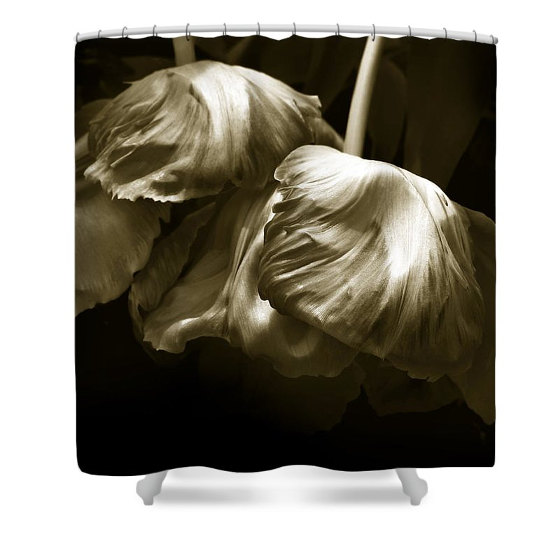 Flowers Shower Curtain featuring the photograph Chocolate Kisses by Jessica Jenney