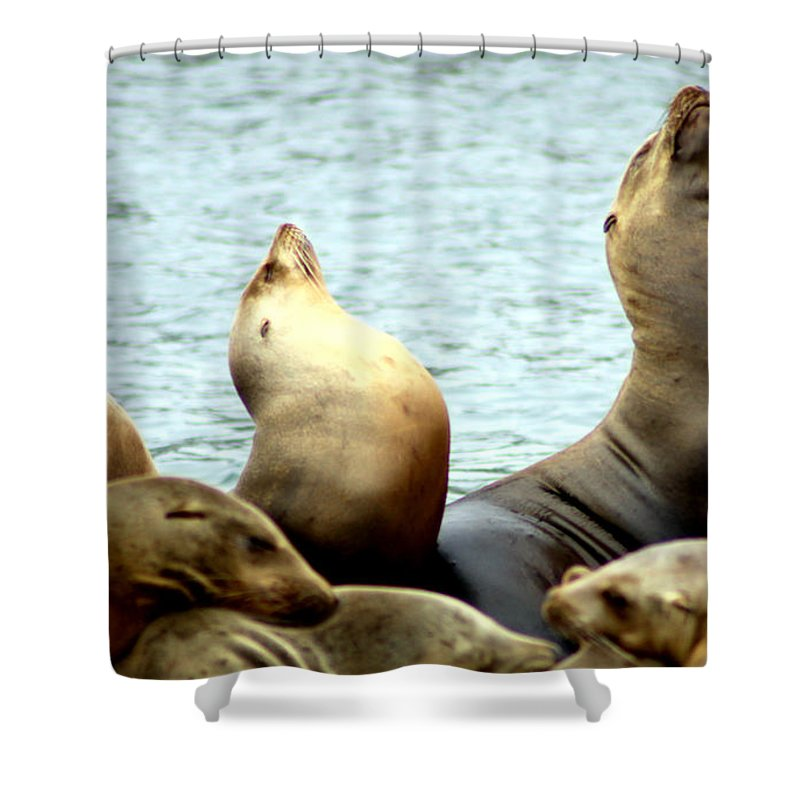 Sealion Shower Curtain featuring the photograph Chorus Line by Roger Parker