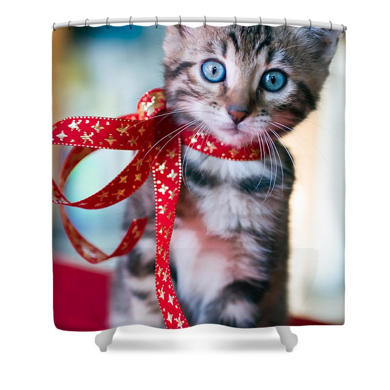 Christmas Kitten Shower Curtain Featuring The Photograph By Elisabeth De Vries