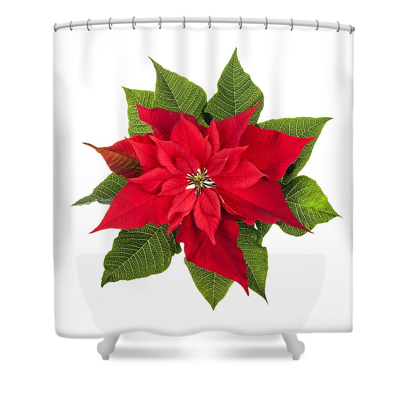Poinsettia Shower Curtain Featuring The Photograph Christmas By Elena Elisseeva