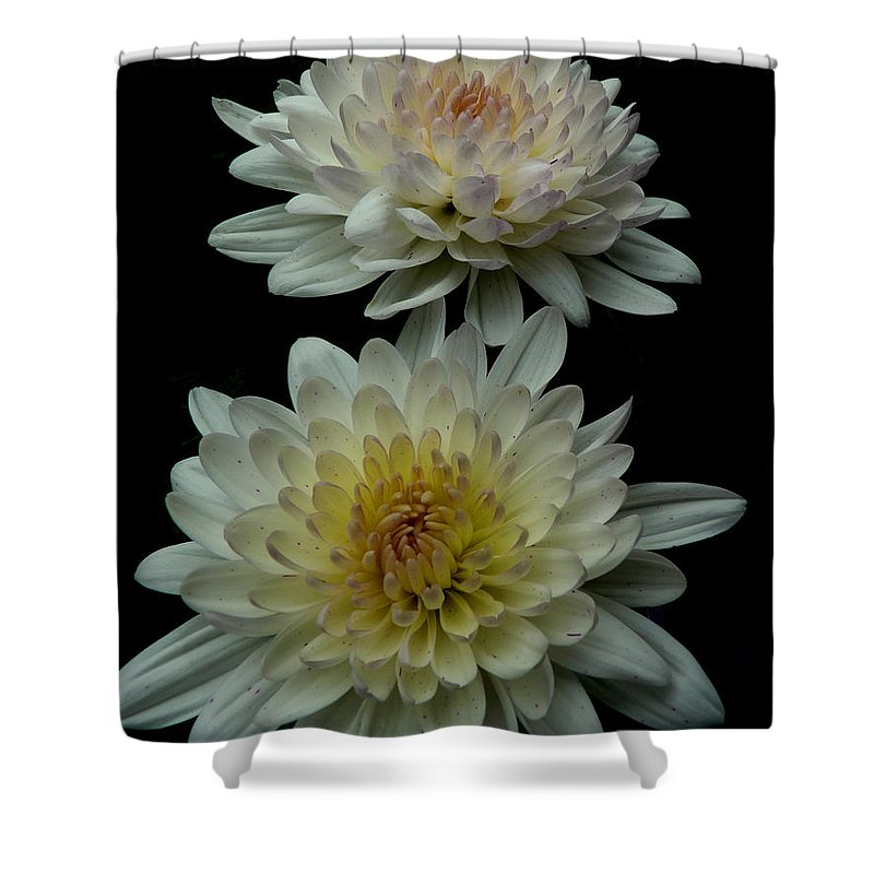 Flowers Chrysanthemum Garden Nature Shower Curtain featuring the photograph Chrysanthemum by Diane Hawkins