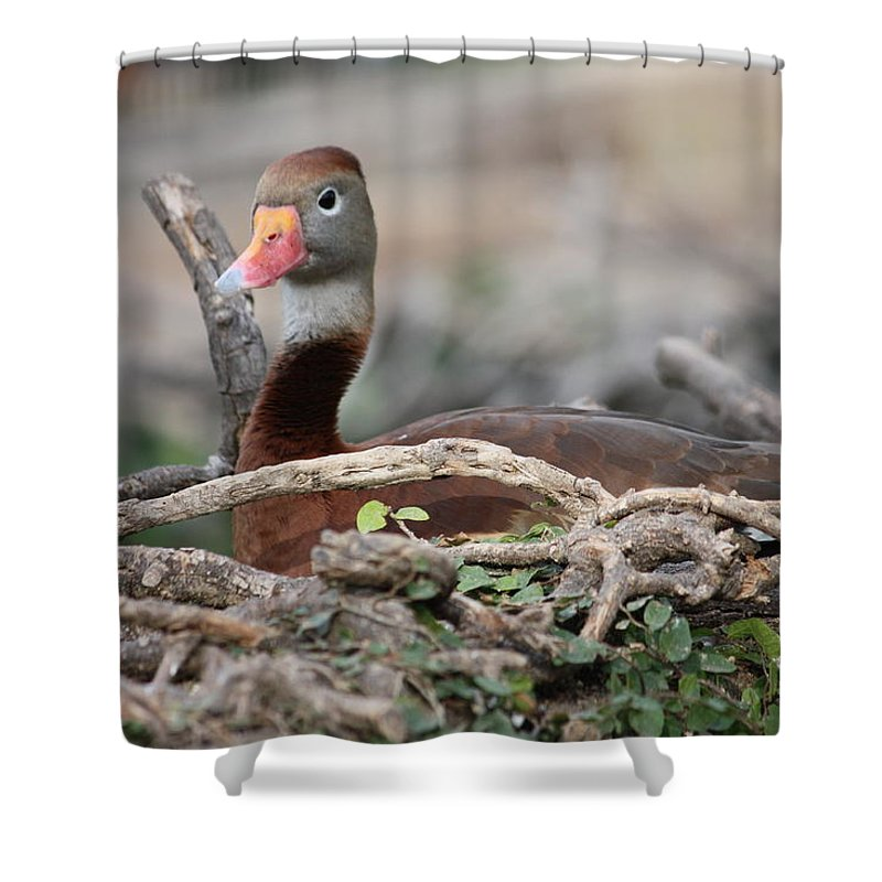 Teal Shower Curtain featuring the photograph Cinnamon Teal by Jeff Tuten