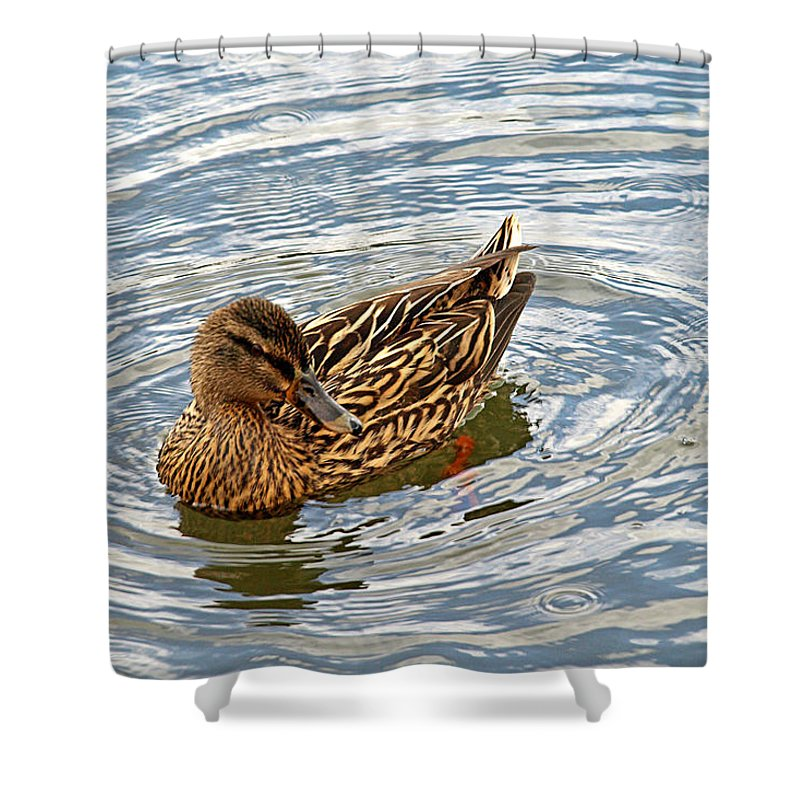 Duck Shower Curtain Featuring The Photograph Circle Of Life