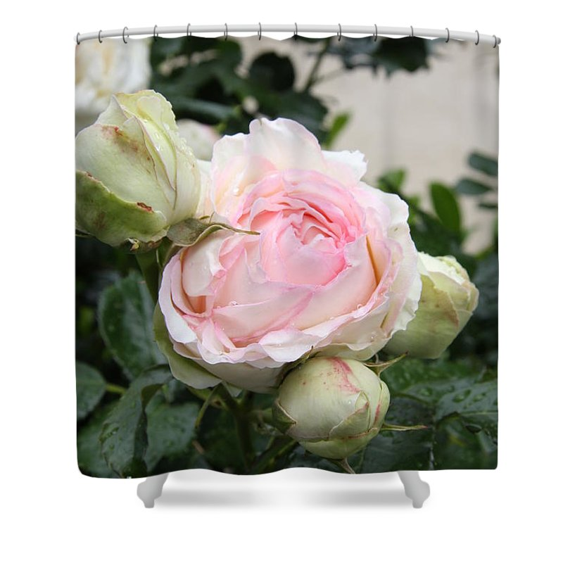 Roses Shower Curtain featuring the photograph Classic Rose by Christiane Schulze Art And Photography