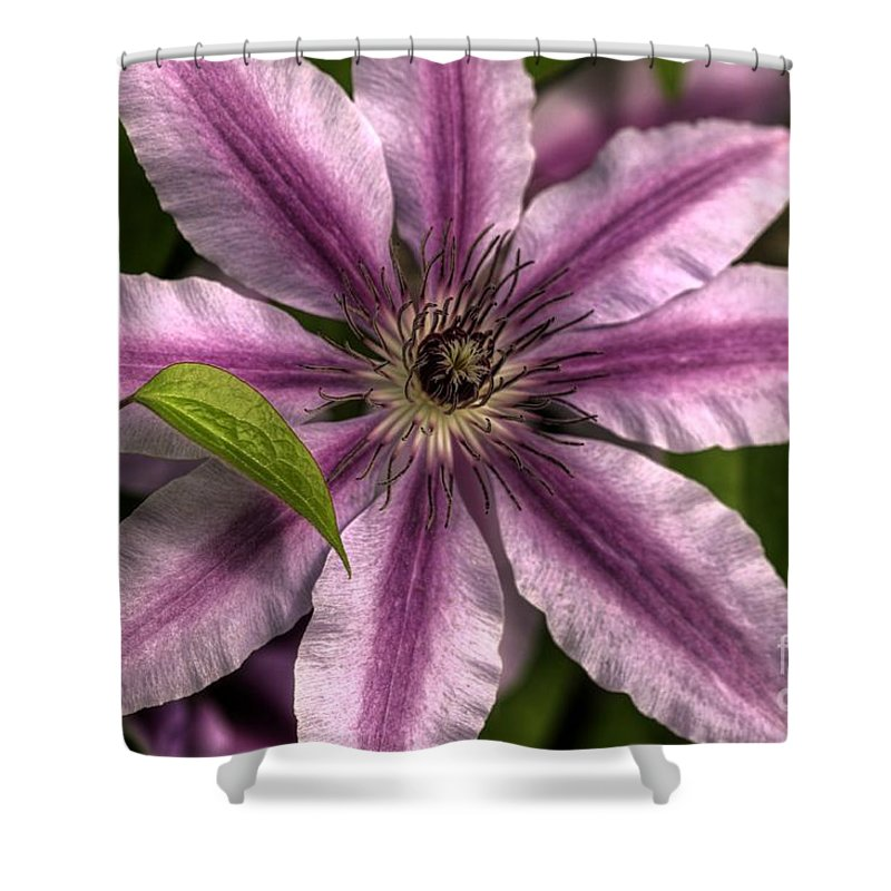 Chris Fleming Shower Curtain featuring the photograph Clematis And Leaf by Chris Fleming