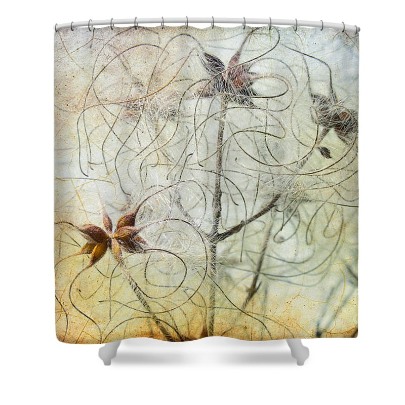 Clematis Virginiana Shower Curtain featuring the photograph Clematis Virginiana Seed Head Textures by Ann Garrett