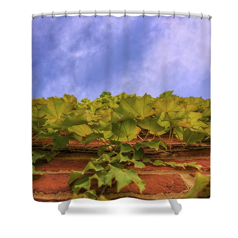 Ivy Shower Curtain featuring the photograph Climbing The Walls - Ivy - Vines - Brick Wall by Jason Politte