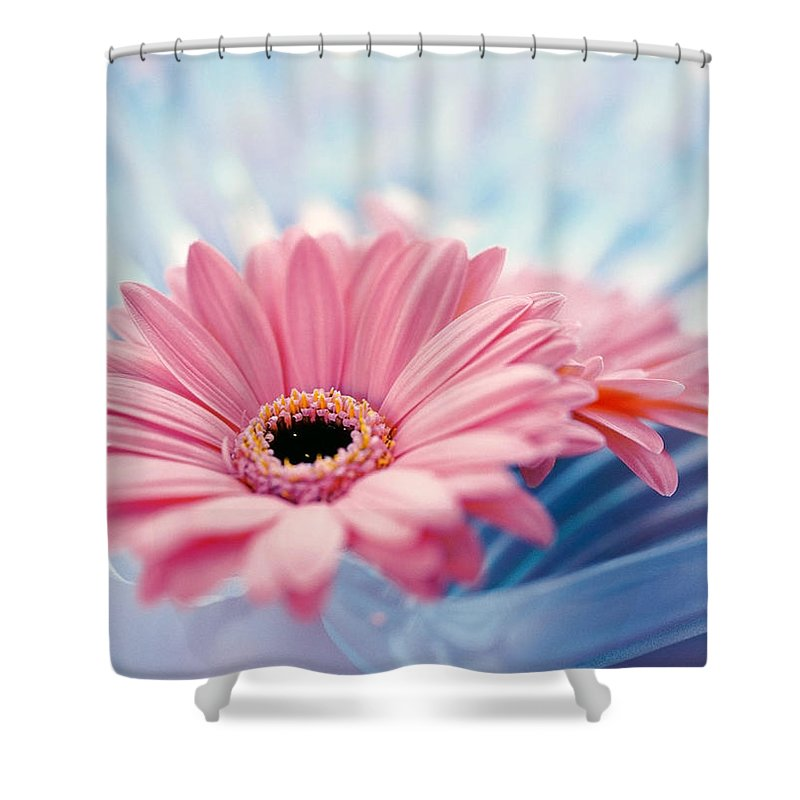 Photography Shower Curtain featuring the photograph Close Up Of Two Pink Gerbera Daisies by Panoramic Images