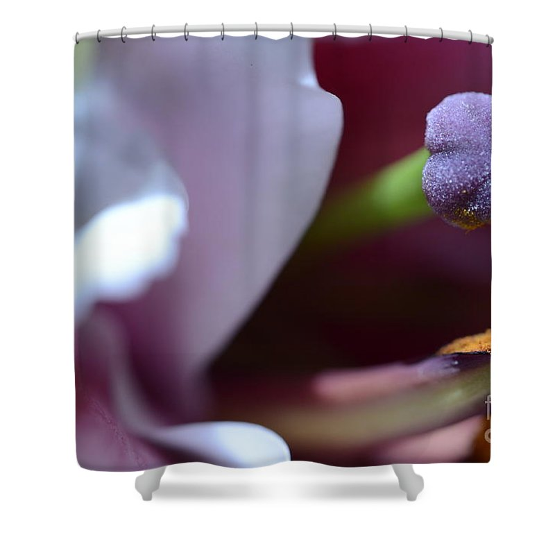 Flower Shower Curtain featuring the photograph Close Up On A Lily by Elaine Berger