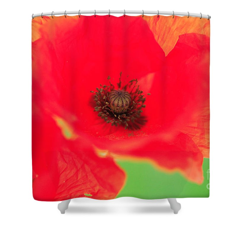 Battle Shower Curtain featuring the photograph Close Up Poppies by Deborah Benbrook