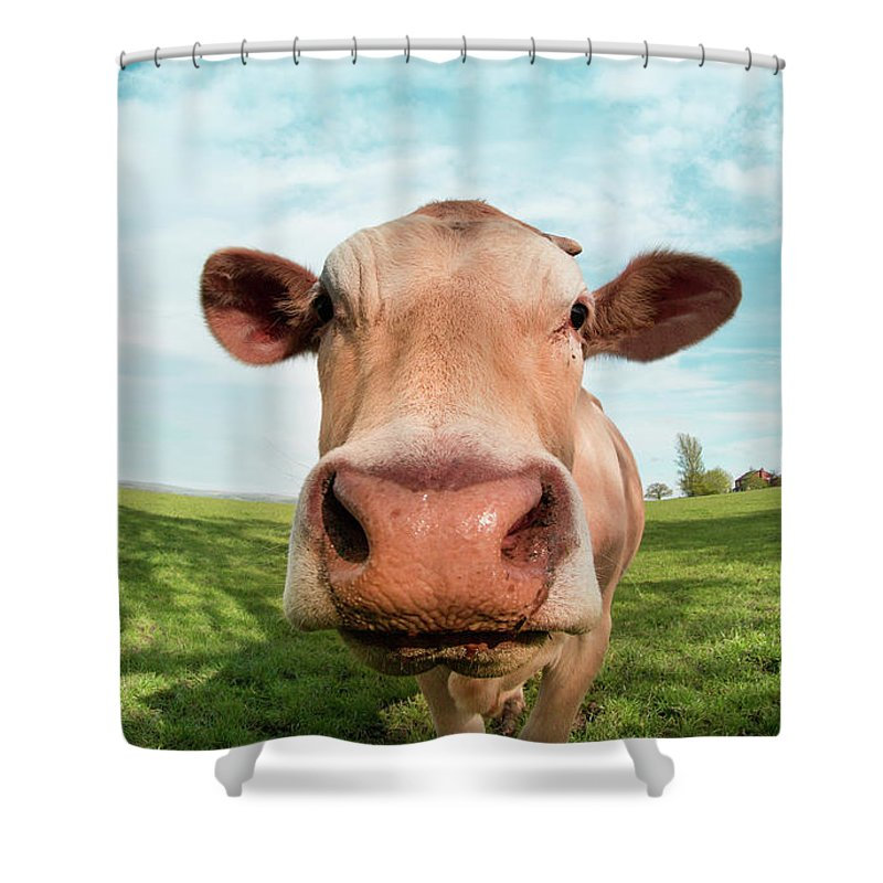 Animal Themes Shower Curtain featuring the photograph Close Up Portrait Of Cow by Peter Chadwick Lrps