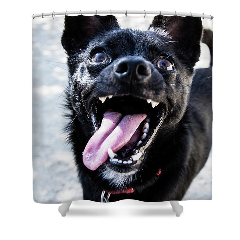Pets Shower Curtain featuring the photograph Close-up Shot Of A Little Black Dog - by Amandafoundation.org